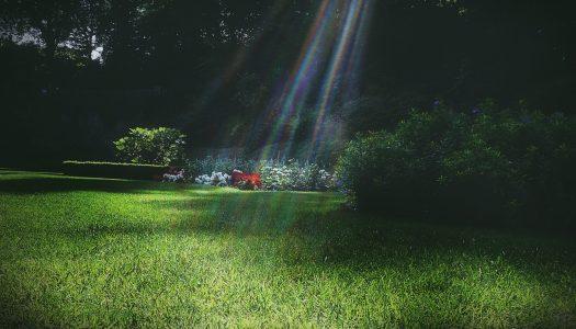 Stappenplan bij aanleg van een tuin