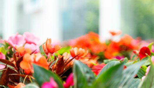 Aanleg en renovatie van een tuin